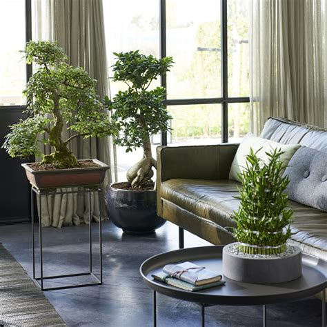 May 2018: Zen plants Houseplants of the month | Flower Council