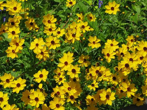 Start wildflowers soon for successful plantings - Orlando