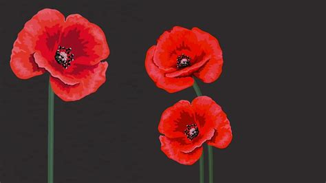Red, white, purple, black? Choosing a Remembrance Day