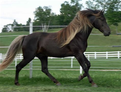 Horse Colours That You Never Knew Existed