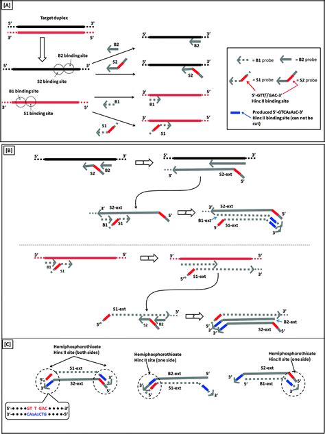 Isothermal amplified detection of DNA and RNA - Molecular