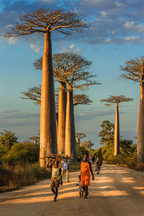 15 Things To Know About The Avenue of Baobabs in Morondava
