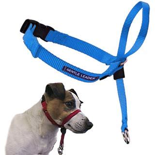 Dogtalk: Head halters for difficult-to-control dogs