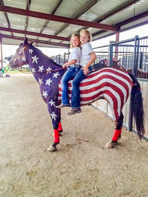 Patriotic Horses at the County Fair - 3 Quarters Today
