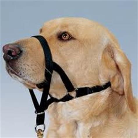 The Gentle Leader for Dogs - Is it Right for Your Dog