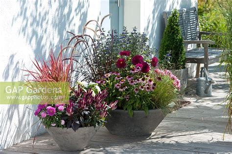 GAP Gardens - Containers on patio planted with (1st