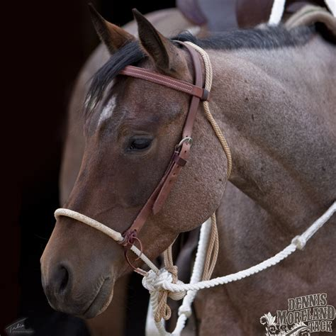 How to Choose the Right Texas Style Hackamore for Your