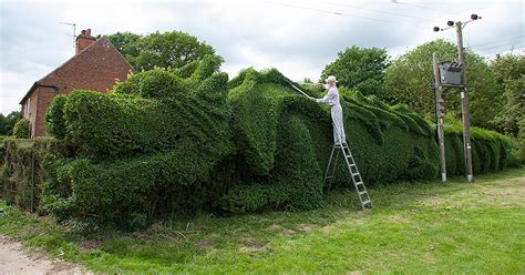 Man Spends 13 Years Transforming a Hedge into a Massive