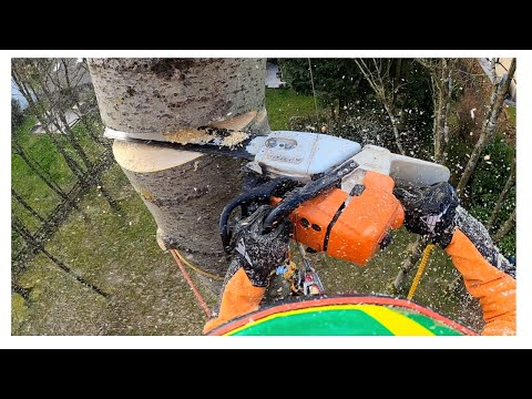 New MSA 161 T Cordless Top Handle Professional Chainsaw