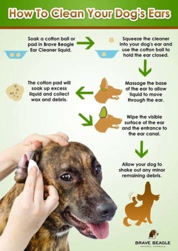 Cleaning Your Dog's Ears- How Much Is Too Much?